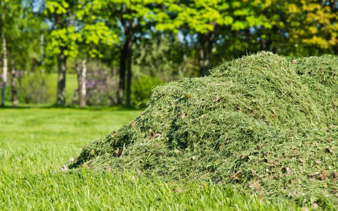 Workshop: Få mere ud af din kommunes biomasse